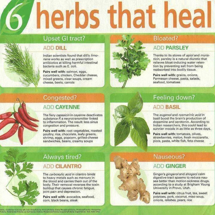 6 herbs that heal..