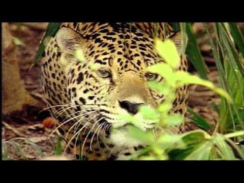 """émission """"Vu du ciel """" sur le Pantanal , au brésil et les animaux en voie de disparition"""