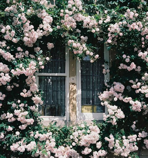 English country garden --- And opening this window