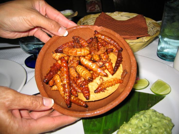 "A mezcal worm is an insect larva found in some types of mezcal produced in Oaxaca, Mexico.The larva is usually either a gusano rojo (""red worm"") or a chinicuil (""maguey worm""), the caterpillar of the Hypopta agavis moth. The red worm is typically considered tastier.  Contrary to the popular belief of many, a true Tequila does not contain a worm. It is only in Tequila's brother Mezcal."
