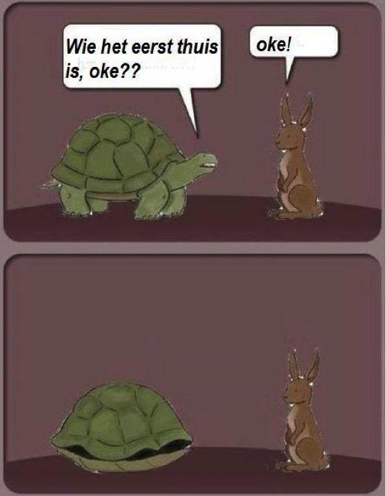 Strip van twee plaatjes gebaseerd op de fabel over de wedstrijd tussen de haas en de schildpad. De schildpad vraagt: Wie het eerste thuis is, oké? De haas gaat akkoord en de schildpad wint omdat deze zich gewoon terugtrekt in zijn schild.