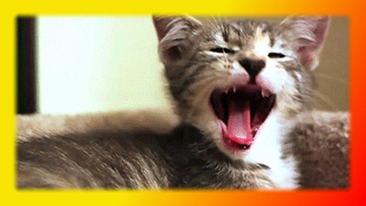 Прикольные кошки и котята Для детей и не только Смешное про кошек Создай...