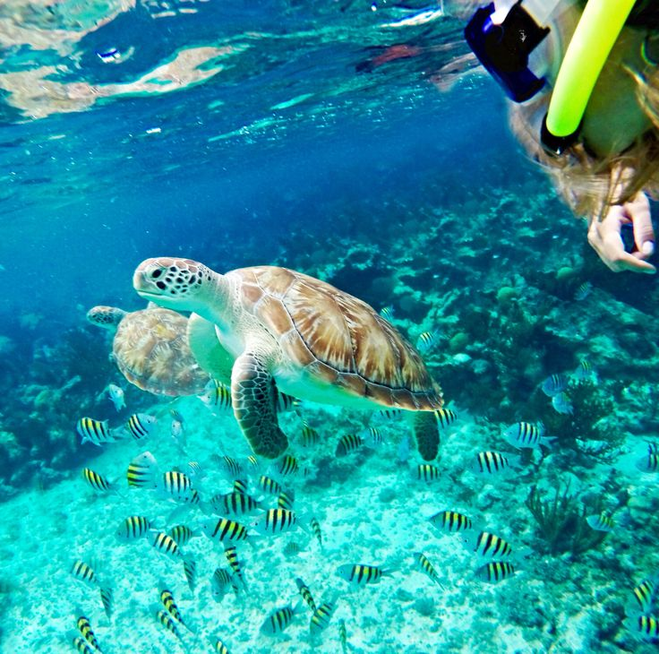 Turtle #summer #tumblr