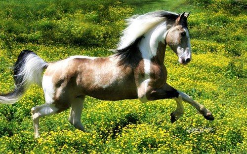 Tri-colored horse.BEAUTIFUL!!!!!!!