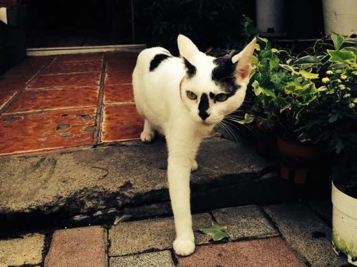 the cat in Busan