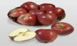 Cazip fiyat ve çeşitli ödeme kolaylığı ile elma fidanı çeşitlerini görmek için linke tıklayınız;https://www.onlinebahcem.com/fp~k~elma-fidani-26