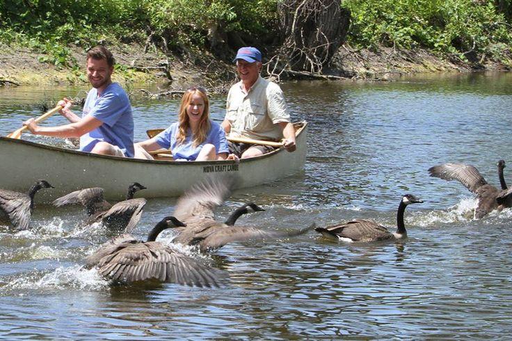 #salthaven #wildlife #release #rehabilitation #geese