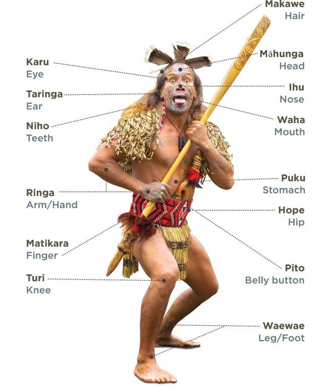 """Te Tinana - Body Parts."" New Zealand Trade and Enterprise.  Te Kete Tikanga Māori - Māori Cultural Kit. (2012)."