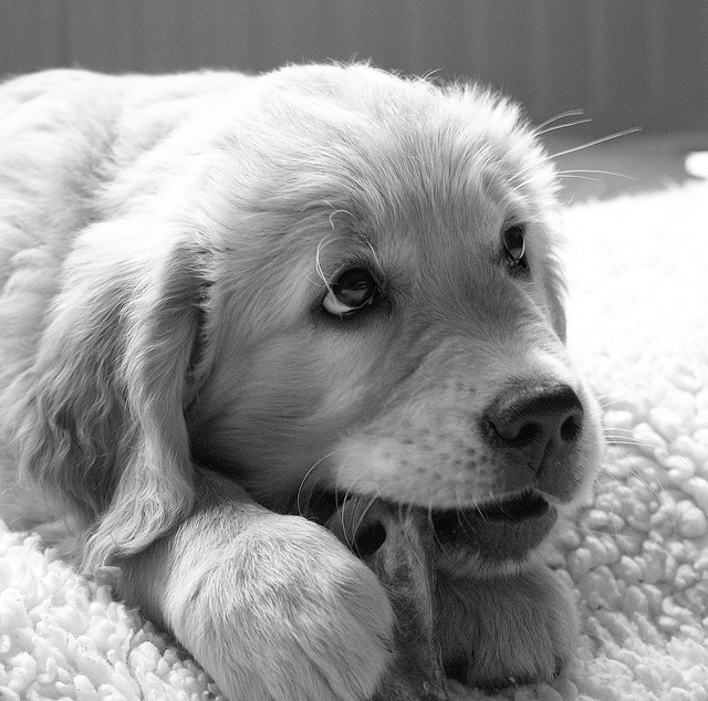 So cute! Reminds me of my Aunt and Uncles doggie.