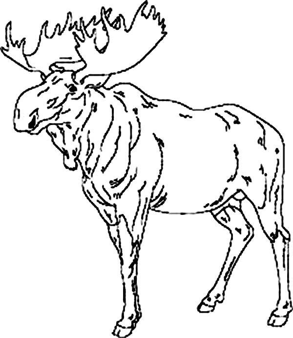Moose Moose Leader Coloring Page Coloring Pages Kids Coloring Books Coloring Book Pages