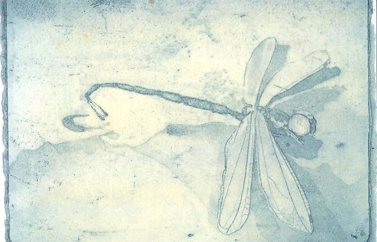 """Kylie Blackley """"Dragonfly in blue in ochre"""" Etching and aquatint $60"""