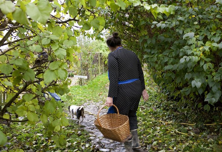 Camilas foraging courses at the farm,  garden, fields and woods, fall 2016, and spring 2017. .Tickets at www.fuglebjerggaard.dk