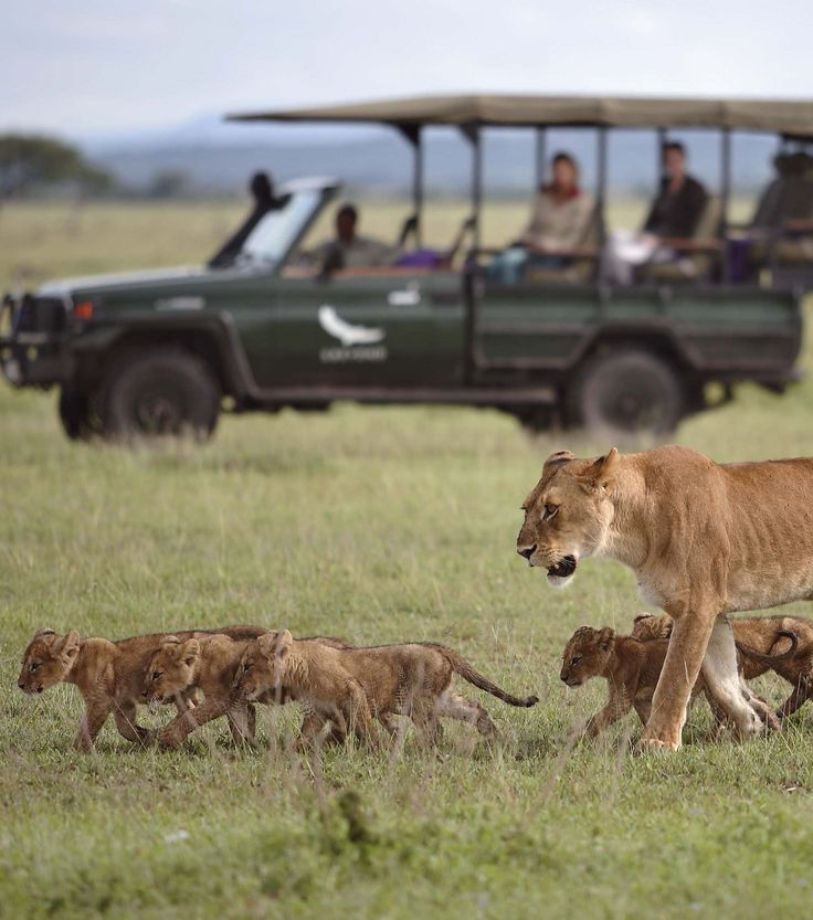 Grumeti Serengeti Tented Camp in Tanzania offers relatively exclusive access to a park well known for its swarming game and its popularity with wildlife lovers. Timbuktu Travel.