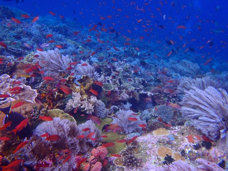 #BatuBolong is my favorite dive site at the #Komodo Nationalpark, #Indonesia