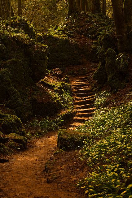 forest stairway, puzzlewood, near coleford in the forest of dean, england | travel destinations in the united kingdom + nature photography #adventure