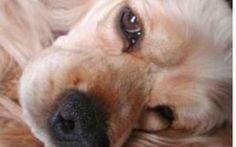 Come fare prevenzione per le malattie croniche del tuo cane #cane #cani #malattiecroniche