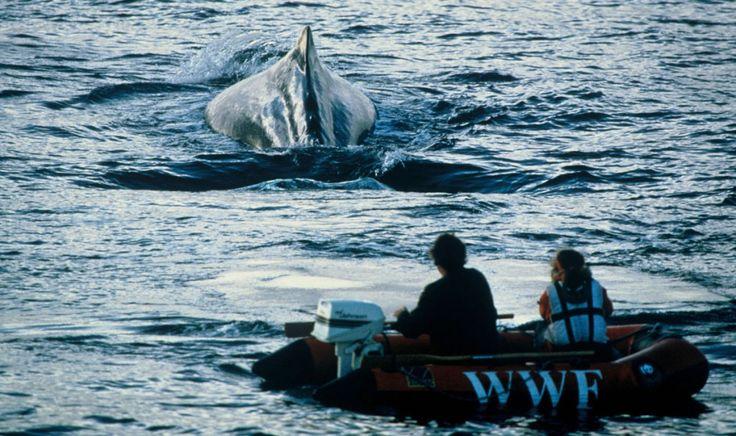 WWF alerta sobre las ballenas envenenadas por la contaminación plástica en el Mediterráneo