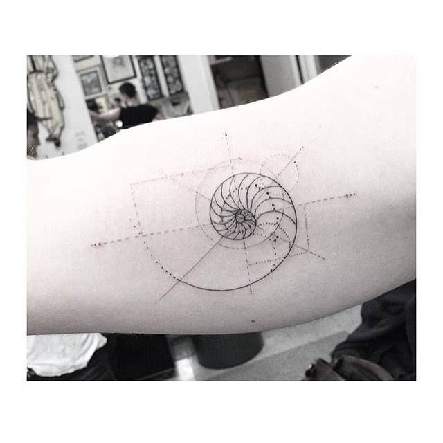 Fine line golden ratio tattoo on the right inner arm.