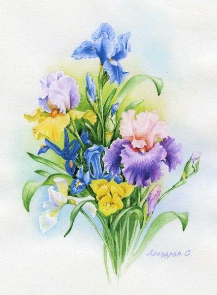 Gallery.ru / Photo # 1 - akvarell virágok Olga Drozdova - Mislana