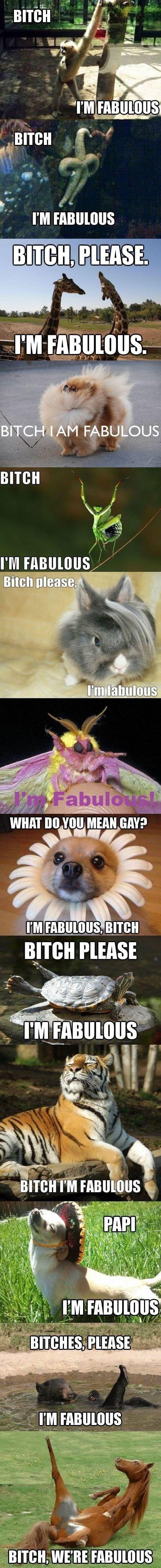 I'm fabulous animal edition