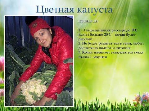 Выращивание капусты (семинар)