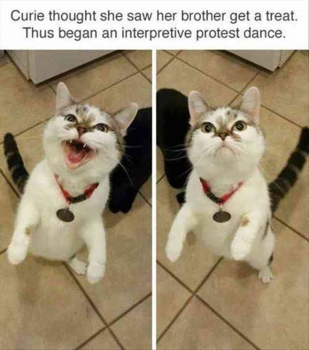 70 Funny Animal Pictures