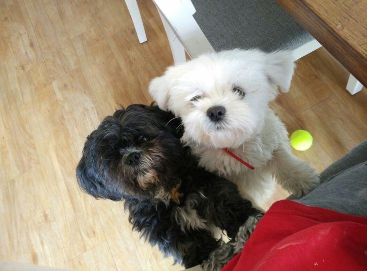 My cuties#nutella#black&white