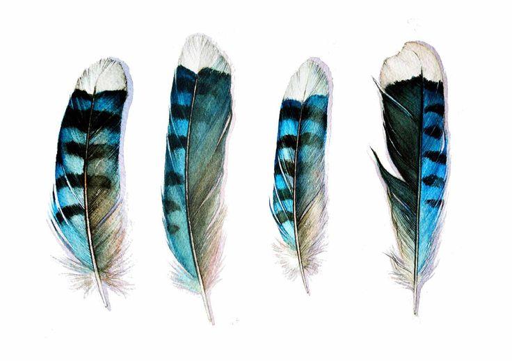 Four Blue Jay Feathers Art Card от jodyvanB на Etsy