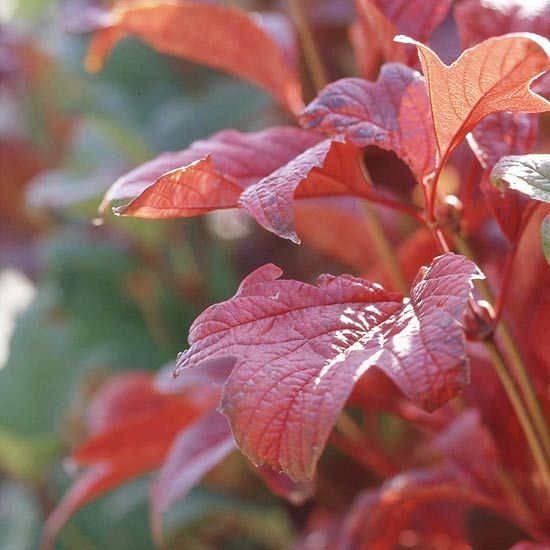 63 best greenhouse images on pinterest gardening ornamental top trees and shrubs for fall color mightylinksfo Images