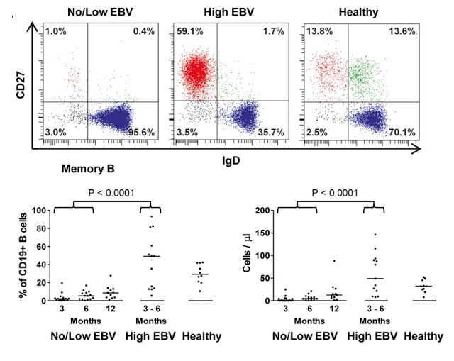 "EBV driving Memory B cell Numbers   You asked ""Does EBV influence memory B cell formation?  The answer is yes. This is not about MS so if not interested don't read  Burns DM Tierney R Shannon-Lowe C Croudace J Inman C Abbotts B Nagra S Fox CP Chaganti S Craddock CF Moss P Rickinson AB Rowe M Bell AI.emory B-cell reconstitution following allogeneic hematopoietic stem cell transplantation is anEBV-associated transformation eventBlood. 2015;126(25):2665-75.  In this study they did HSCT and they…"