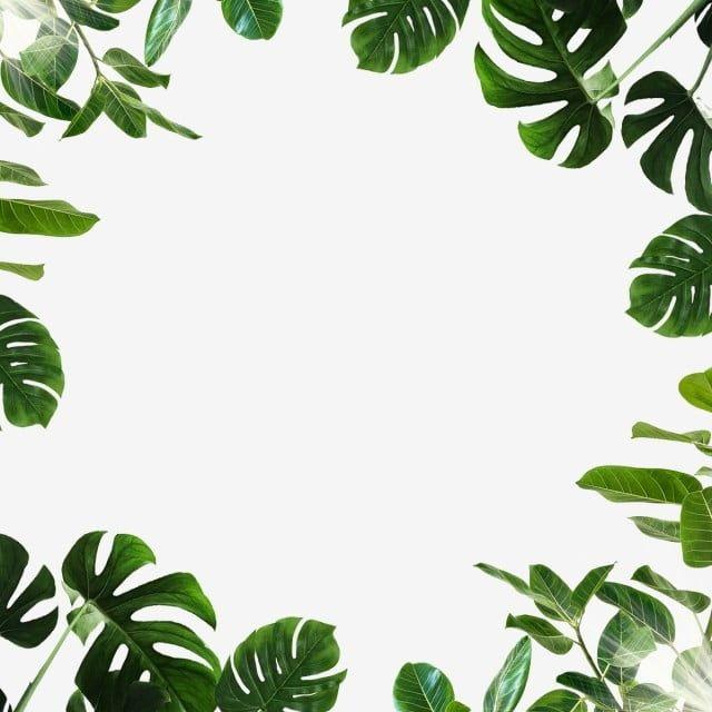Tropicheskij List Monstera Grin Znachki Listev Zelenye Znachki Tropicheskij Png I Psd Fajl Png Dlya Besplatnoj Zagruzki Watercolor Leaves Tropical Leaves Leaf Clipart