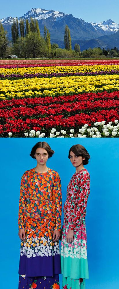 fields of flowers: Sky Blue, Colors Boom, Marigold, Marc Jacobs, Flower Pop, Yellow Red Blue Flower, Fields, Red Sway, Bold Hues