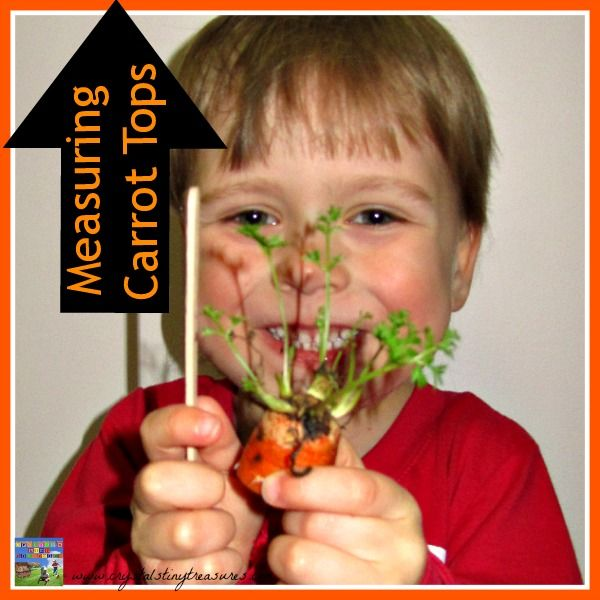 MEASURING CARROT TOPS - Crystals Tiny Treasures