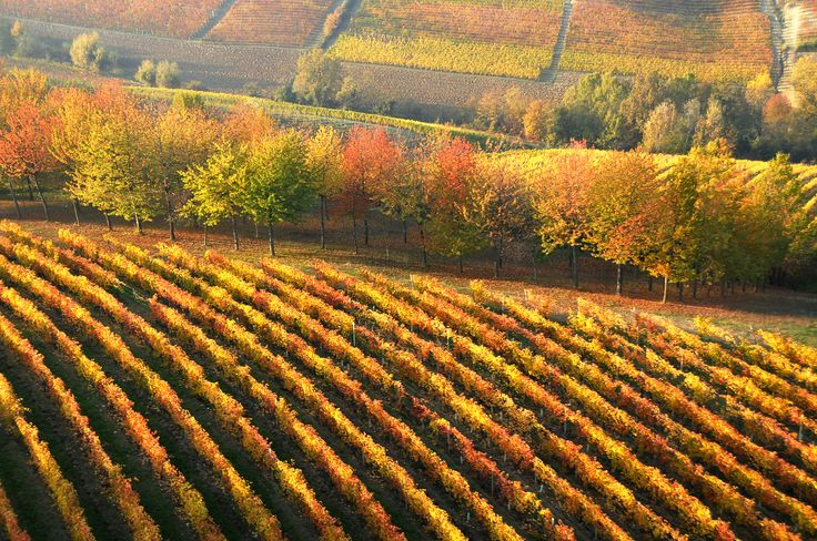 #Vineyards are becoming red. It's #autumn time here in #Monferrato. Monferrato: discover it.   I #vigneti che si tingono di rosso e d'oro. L'ultimo sole tra i colli; è tempo d'#autunno qui nel #Monferrato. Il Monferrato: un luogo da scoprire.