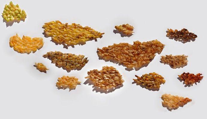 GIULIA BERRA: About Squame (Scales)