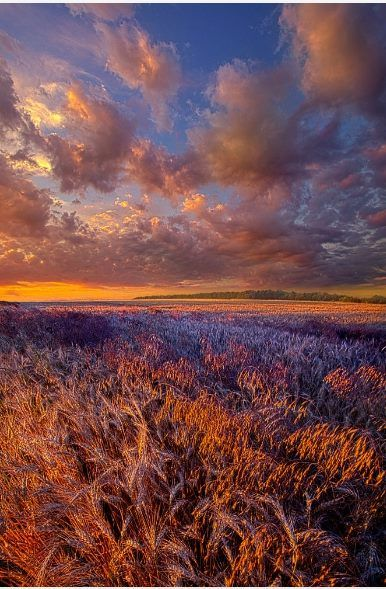 """Американский фотограф Phil Koch создает потрясающие пейзажные снимки, которые просто завораживают своей красотой. Все работы были сделаны во время путешествия по родному штату фотографа - Висконсин. Свои работы Phil Koch объединил в серию """"Горизонт"""" .  fb.me/aboveart.ru aboveart.ru"""