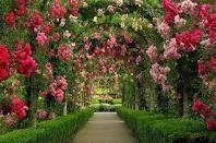 Butchart Gardens, again