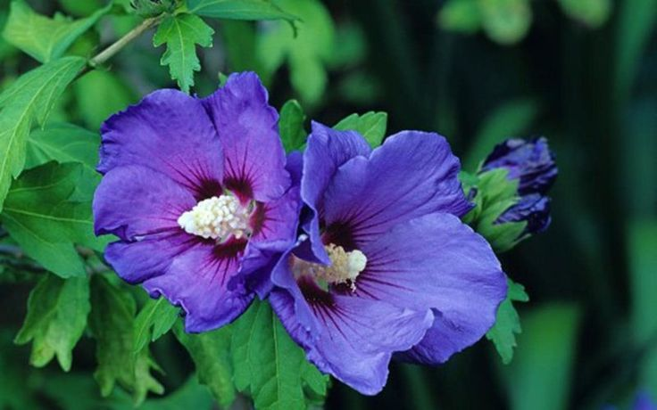 A Buffalo Township couple's hibiscus plants looked a bit too much like marijuana. A couple who say they were handcuffed for hours in a police patrol car after their hibiscus plants were confused for marijuana are suing the police and an insurance...