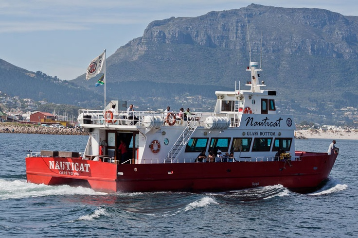 Hout Bay Photo Gallery - Seal Island boat trips
