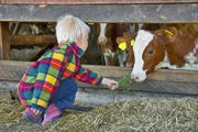 Gut Vogeihof, Salzburgerland. 700 jaar oude boerderij waar de kindern de dieren mogen voeren, koeien mogen melken, brood kunnen bakken en met varkentjes kunnen knuffelen. Ook mogen de kinderen een nachtje in de hooischuur slapen