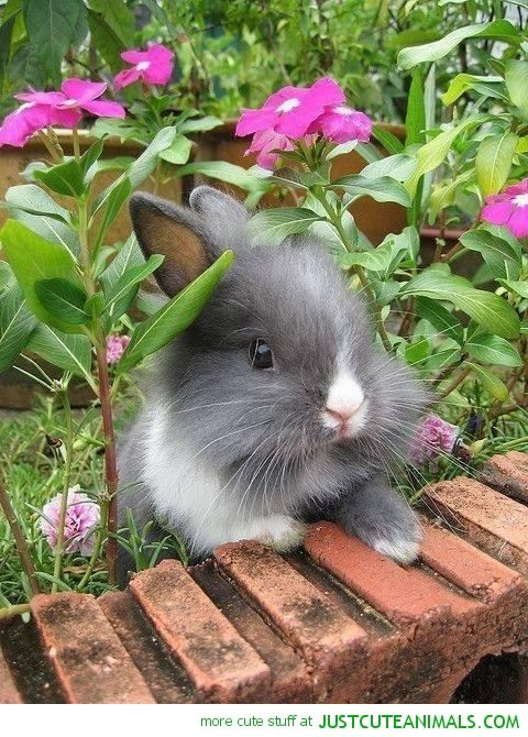 Beautiful Fluffy Bunny