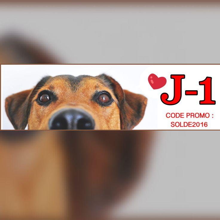 10% de remises dans la catégorie Accessoire de mode ! J-1 grâce au code promo : SOLDE2016  www.univerdogs.com