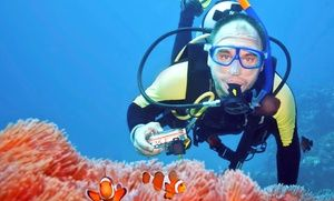 Expert divers lead confined-water courses or open-water courses to prepare students for PADI certification