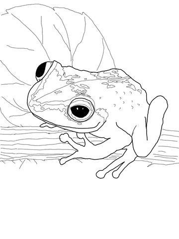 coqui frog coloring page - Coloring Pages Frogs Toads