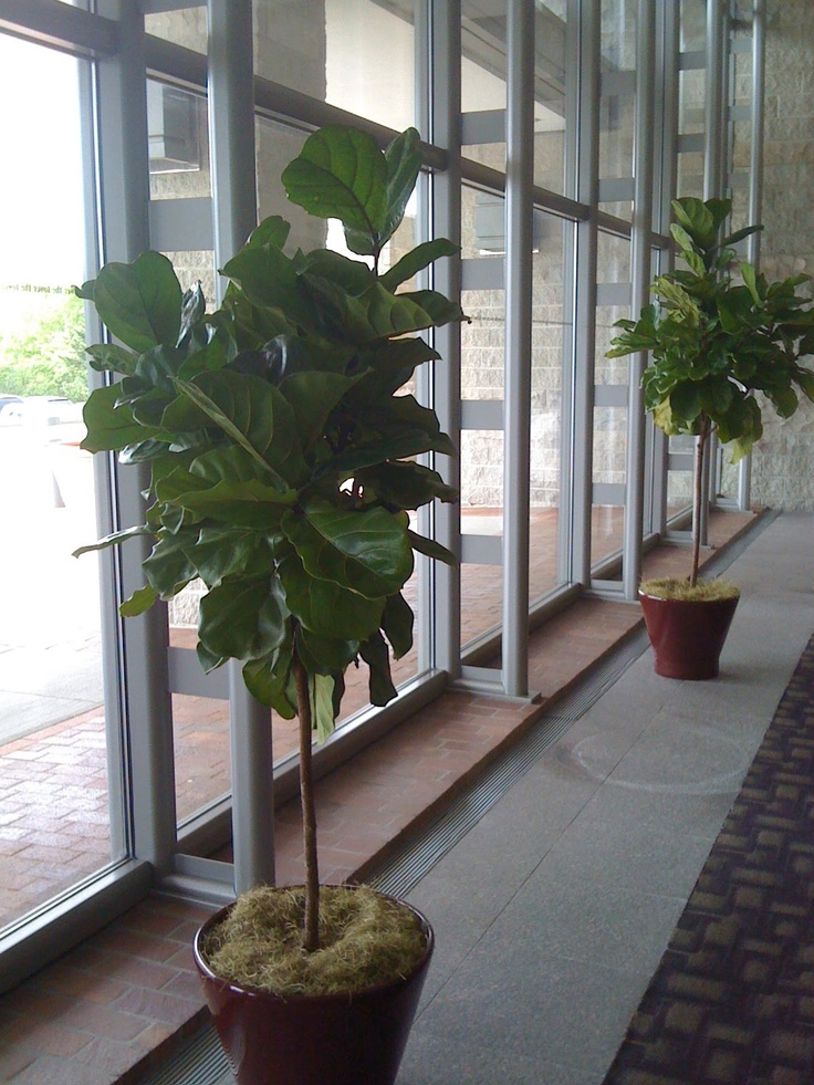 36 Best Images About Showroom Plants On Pinterest Office Plants Spider Mites And Wandering Jew