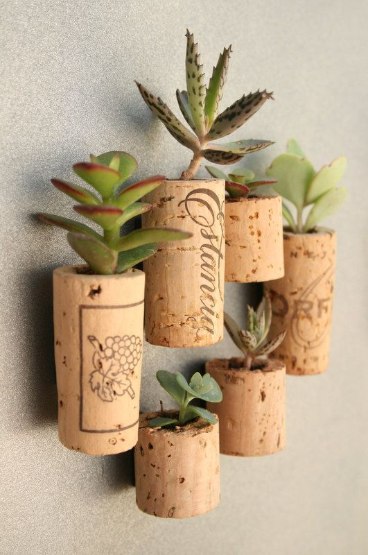 Re-purposed wine corks into magnets that contain soil and real live succulent plants