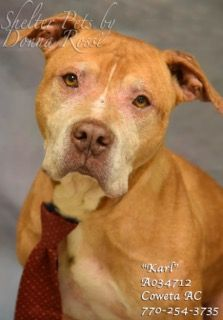 6-8-17, extremely urgent!!! Save this Senior boy from being KILLED!!!