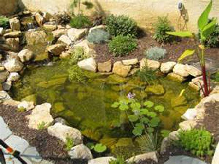 Plan for our red eared slider's outdoor environment.