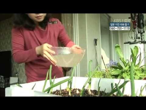 천연비료살충제만들기 - YouTube
