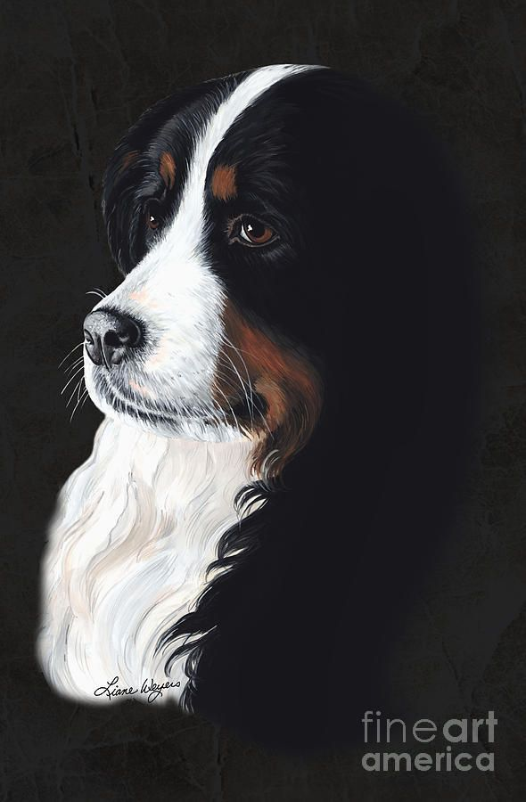 Sweet Female Bernese Mountain Dog Femme Fatail Pup Mysterious And Seductive Woman Charms Ensnare Her Lovers In Bonds Of Irresistible Desire Compromising Painting - Femme Fatail by Liane Weyers
